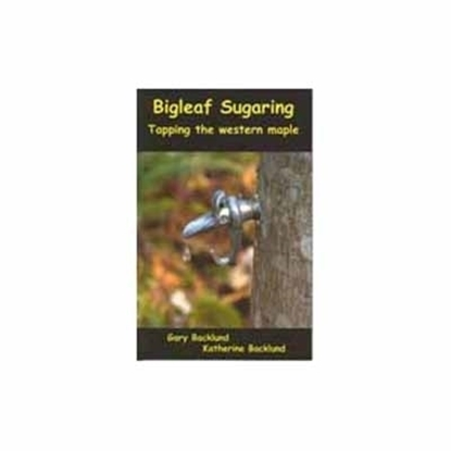 Picture of BIGLEAF SUGARING TAPPING THE WESTERN MAPLE